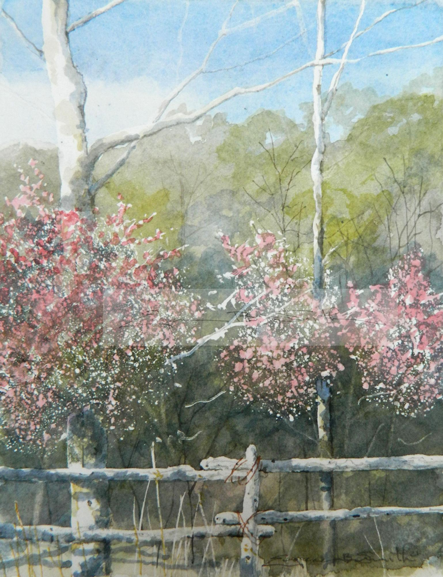 Red Buds at Split Rail ****SOLD****
